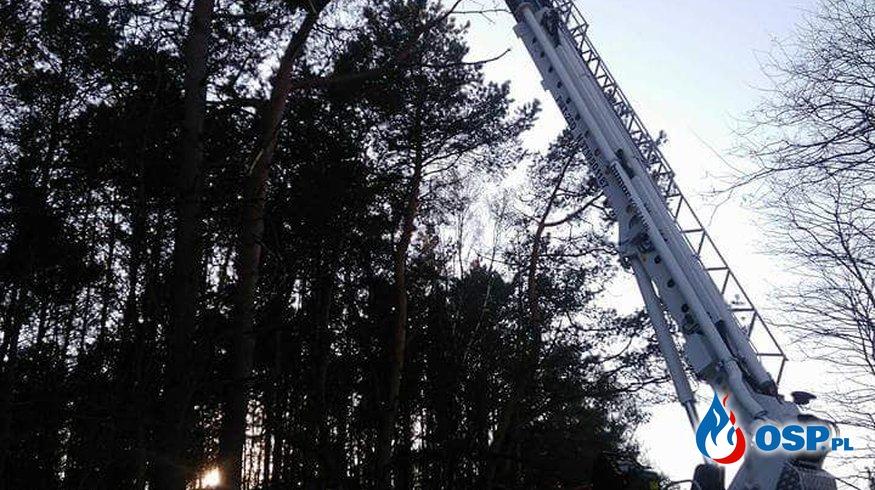 Zwisający konar nad drogą OSP Ochotnicza Straż Pożarna