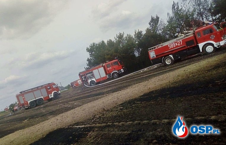Pożar zboża, ścierniska i drzew wokół zabudowania - Ostrowo OSP Ochotnicza Straż Pożarna