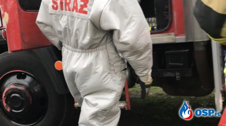 Atak owadów błonkoskrzydłowych OSP Ochotnicza Straż Pożarna