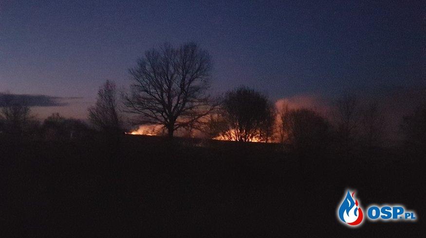 Pożar suchych traw przy ul. Przylaski OSP Ochotnicza Straż Pożarna