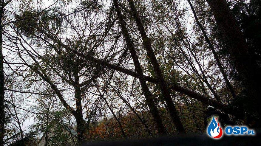 Powalone drzewo na drogę dojazdową w Biertowicach  OSP Ochotnicza Straż Pożarna