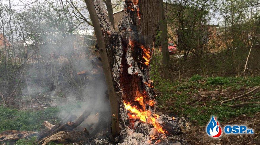 Pożar drzewa w Słupi pod Kępnem OSP Ochotnicza Straż Pożarna