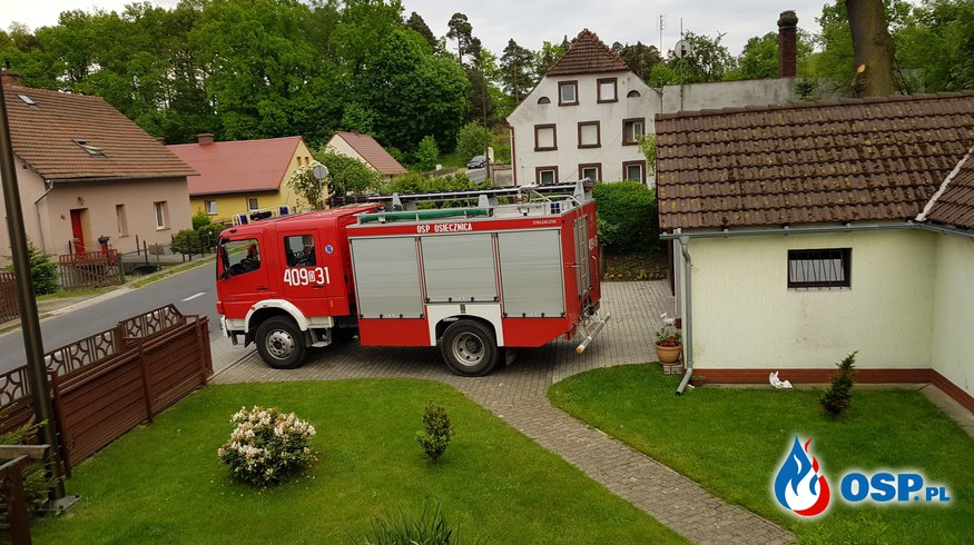 20.05- Usuwanie gniazda os w Kliczkowie OSP Ochotnicza Straż Pożarna