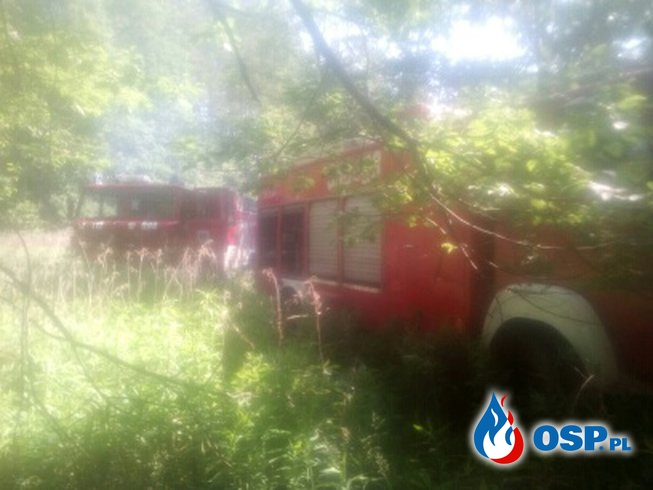 Dziwiszów: Pożar lasu. OSP Ochotnicza Straż Pożarna