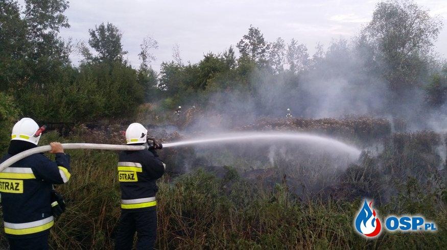 Pożar dzikiego wysypiska śmieci i suchej trawy w miejscowości Mokra OSP Ochotnicza Straż Pożarna