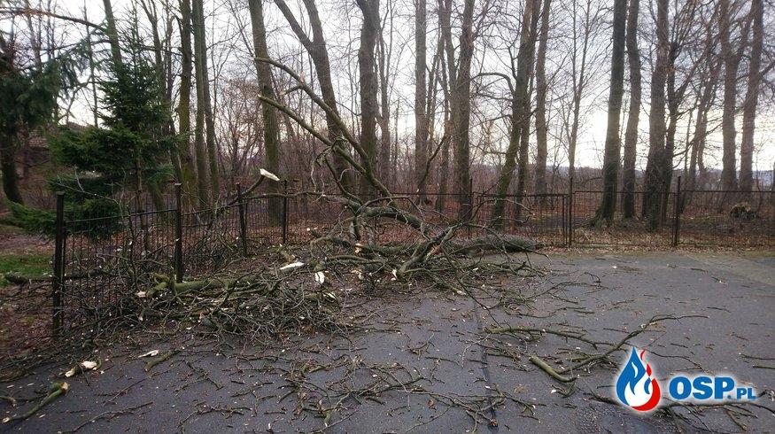 Powalone drzewo przy parkingu OSP Ochotnicza Straż Pożarna
