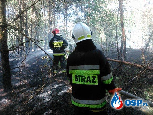 02.06.17 - Dwa pożary poszycia leśnego,połowa dnia spędzona w lesie. OSP Ochotnicza Straż Pożarna