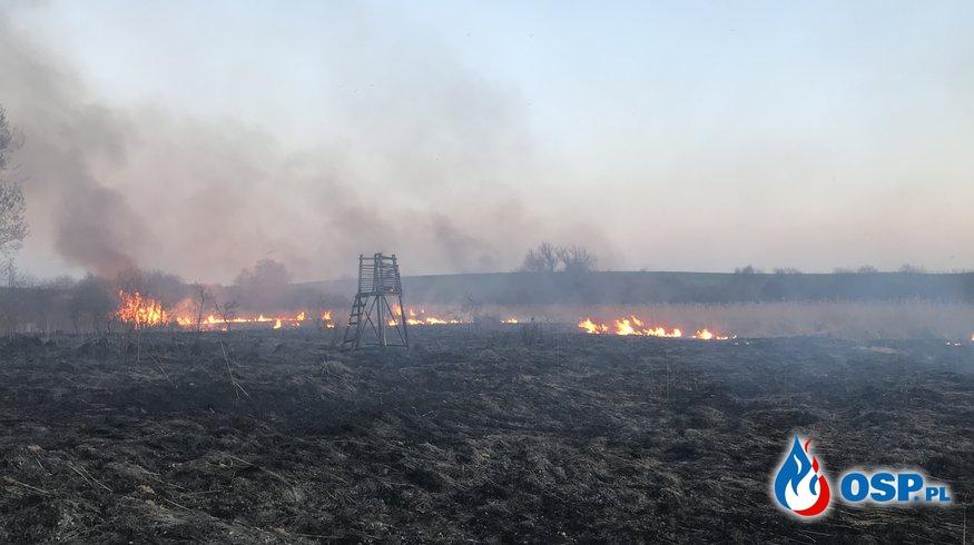 67-68 Dwa pożary traw przy Kaliskiej OSP Ochotnicza Straż Pożarna