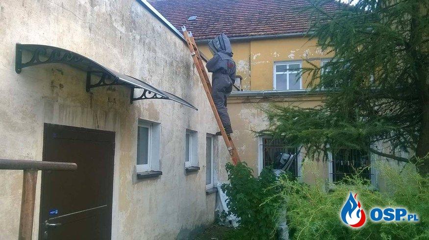 Szerszenie w elewacji budynku Szkoły Podstawowej w Boczowie!!! OSP Ochotnicza Straż Pożarna