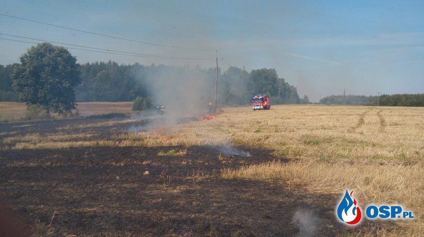 Pożar scierniska Klasztorne 28-08-2016r. OSP Ochotnicza Straż Pożarna