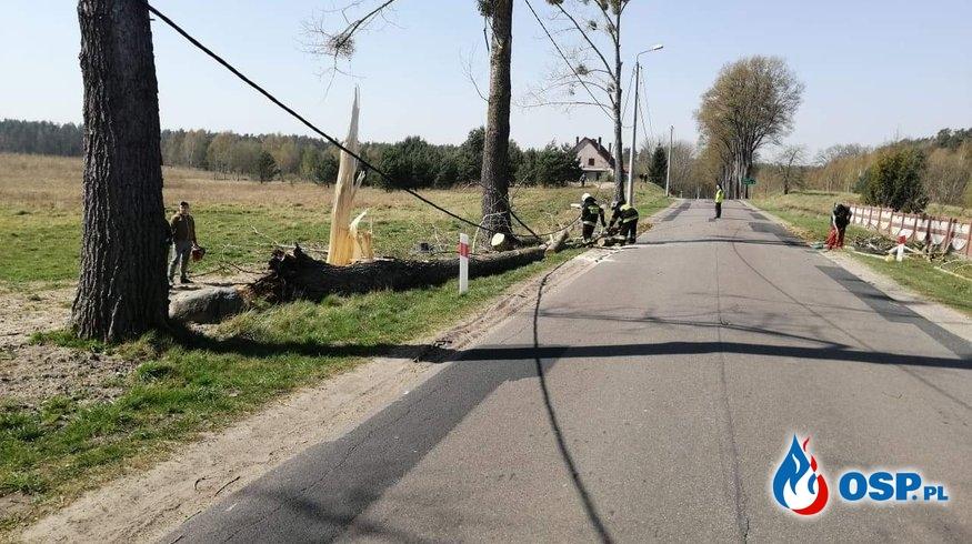 3 wyjazdy do powalonych drzew i pożar nieużytków 23-04-2019 OSP Ochotnicza Straż Pożarna