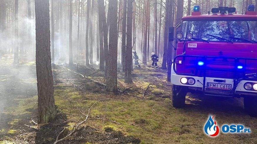Uderzenie pioruna przyczyną pożaru lasu. OSP Ochotnicza Straż Pożarna