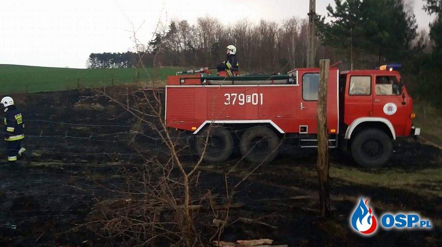 Kursko - Pożar zagrażający lasowi OSP Ochotnicza Straż Pożarna