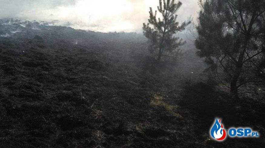 Pożar suchej trawy w Malińcu (gm. Babiak) OSP Ochotnicza Straż Pożarna