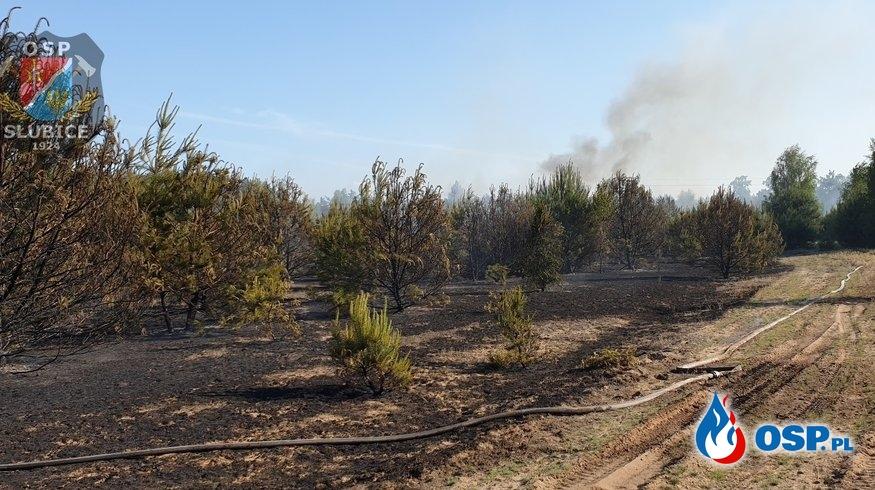 Pożar w lesie, zagrożone budynki mieszkalne OSP Ochotnicza Straż Pożarna