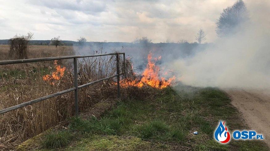 48/2019 Pożar trawy OSP Ochotnicza Straż Pożarna