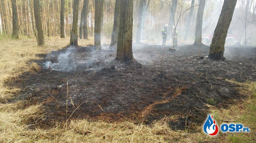 Pożar lasu - Bytnica 15.04.2018 OSP Ochotnicza Straż Pożarna