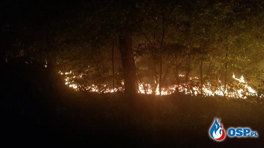 Pożar lasu, kilka gorących godzin. (11.05.2018r.) OSP Ochotnicza Straż Pożarna