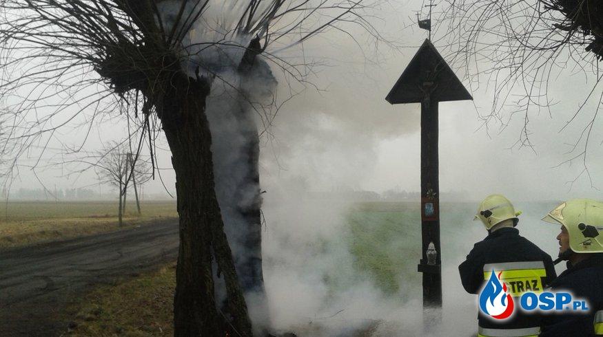 Pożar pamiątkowego drzewa przy ulicy Miłosławskiej OSP Ochotnicza Straż Pożarna
