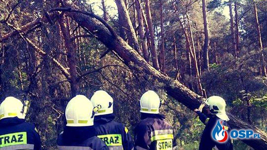 Usunięcie powalonego drzewa OSP Ochotnicza Straż Pożarna