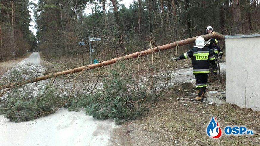 Usuwanie skutków silnego wiatru OSP Ochotnicza Straż Pożarna