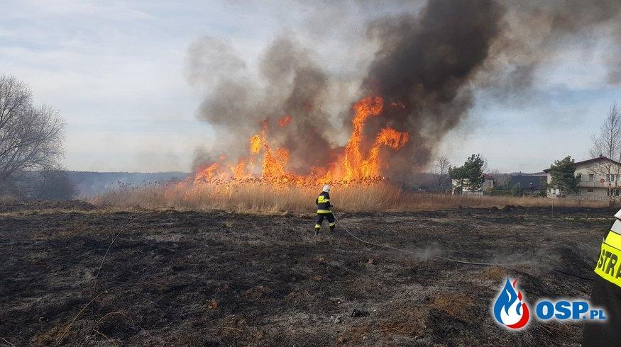 Pożar traw - ul. C. Norwida w Żarkach OSP Ochotnicza Straż Pożarna