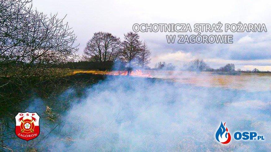 Pożar traw. OSP Ochotnicza Straż Pożarna