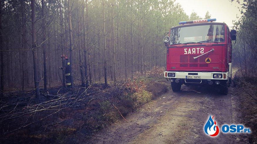 Pożar poszycia leśnego Korzybie 03-04-2019 OSP Ochotnicza Straż Pożarna