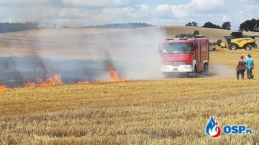 Templewko - Spłonęło 5 hektarów OSP Ochotnicza Straż Pożarna