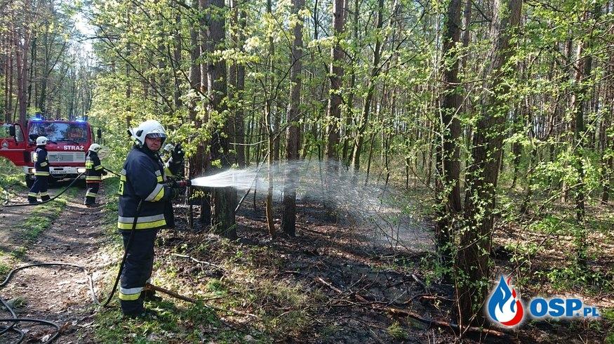 Pożar poszycia leśnego w Otmicach OSP Ochotnicza Straż Pożarna