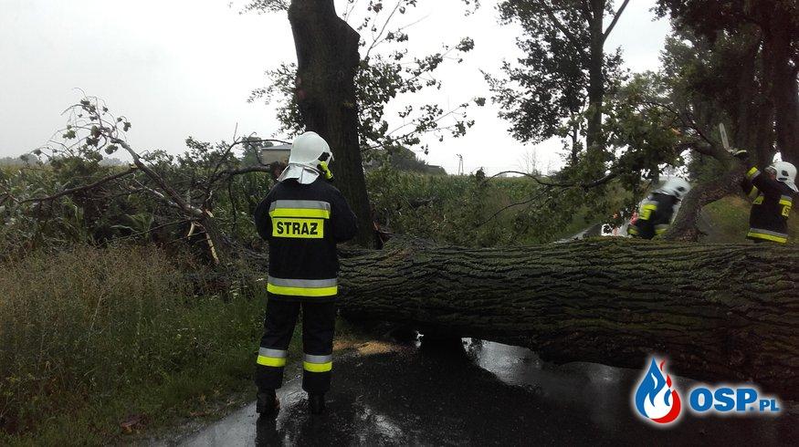 23.07.Powalone w drzewo OSP Ochotnicza Straż Pożarna