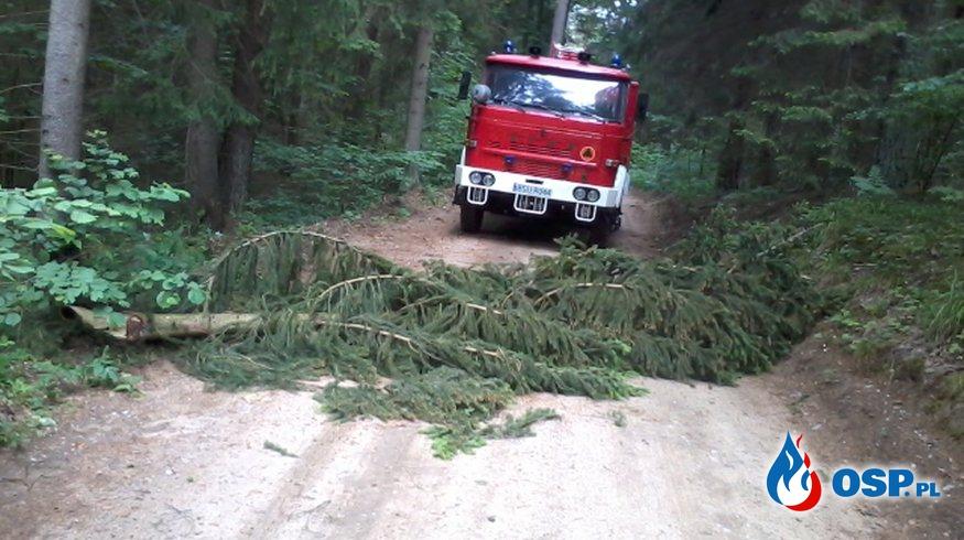 Wyjazdy do złamanych drzew, konarów OSP Ochotnicza Straż Pożarna