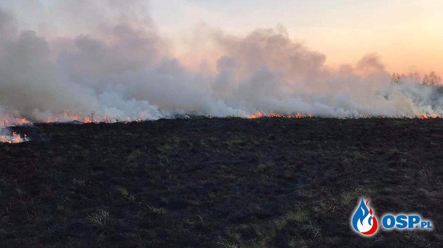 Pożar traw i nieużytków OSP Ochotnicza Straż Pożarna