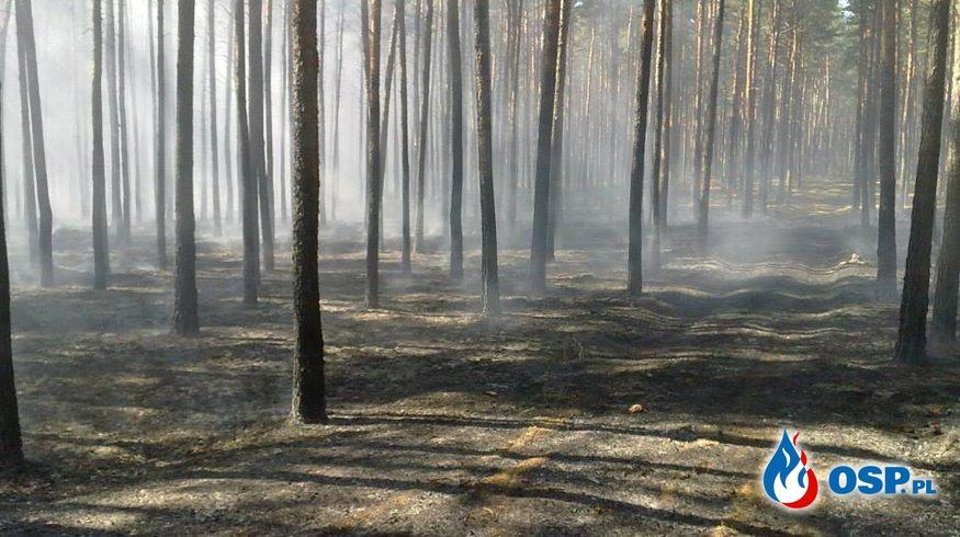 Pożar lasu Sowia Góra OSP Ochotnicza Straż Pożarna