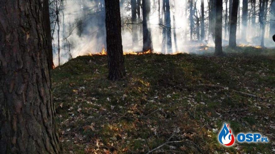 Stróżki – pożar poszycia leśnego OSP Ochotnicza Straż Pożarna