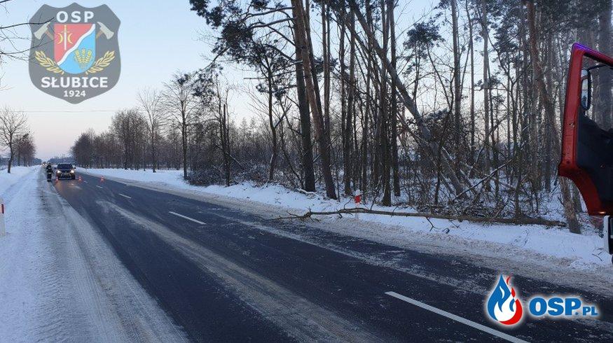 Pochylone drzewo stwarzało zagrożenie dla uczestników ruchu drogowego [WIDEO] OSP Ochotnicza Straż Pożarna
