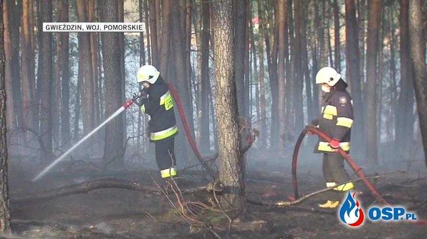 Ponad 1200 pożarów lasów i traw w całym kraju. Akcje gaśnicze utrudniał silny wiatr. OSP Ochotnicza Straż Pożarna