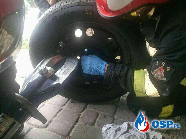 Pies uwięziony w... feldze samochodowej. Na pomoc ruszyli strażacy. OSP Ochotnicza Straż Pożarna