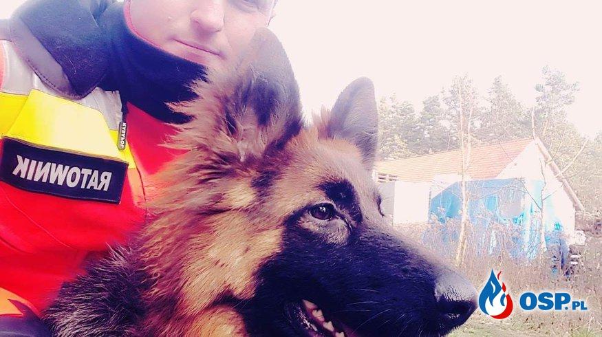 8 psów szkolonych w Lubuskim!! OSP Ochotnicza Straż Pożarna