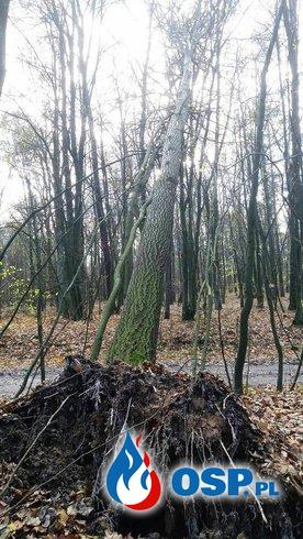 Kolejne drzewo uszkodzone przez silny wiatr OSP Ochotnicza Straż Pożarna