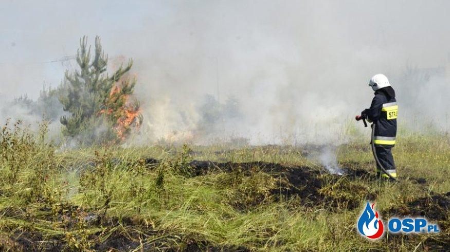 Pożar trawy w Krzewinie [ZDJ+WIDEO] OSP Ochotnicza Straż Pożarna