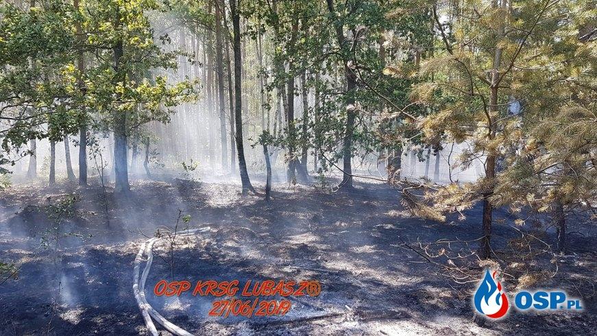 Pożar Lasu przy Leśniczówce w Klempiczu OSP Ochotnicza Straż Pożarna