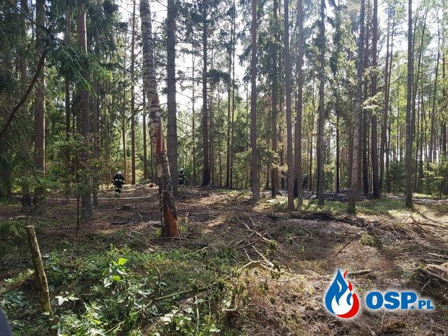 Pożar lasu i otwarcie mieszkania Kępice OSP Ochotnicza Straż Pożarna