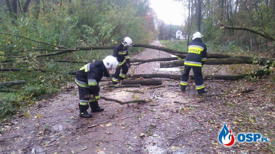Powalone drzewo na drodze. OSP Ochotnicza Straż Pożarna