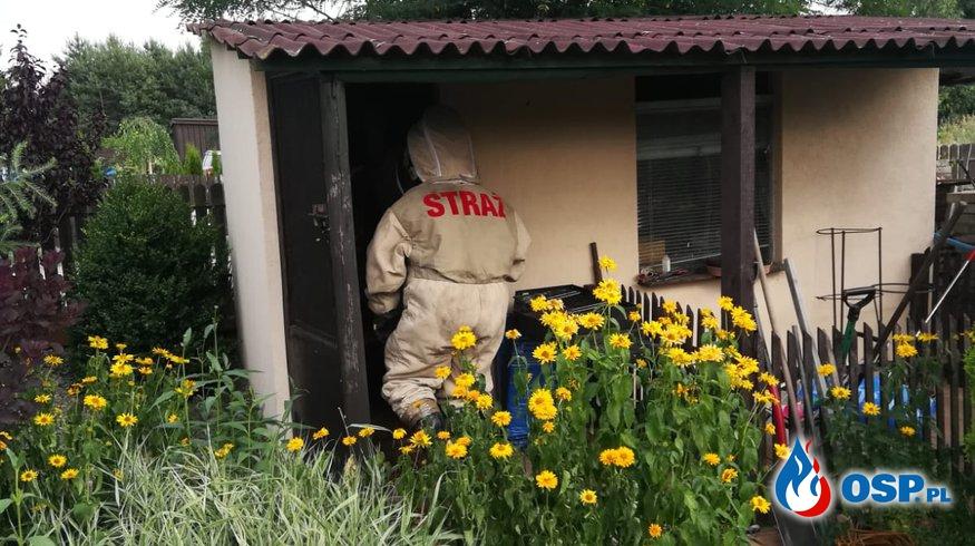 Owady błonkoskrzydłe 09.07.18 OSP Ochotnicza Straż Pożarna