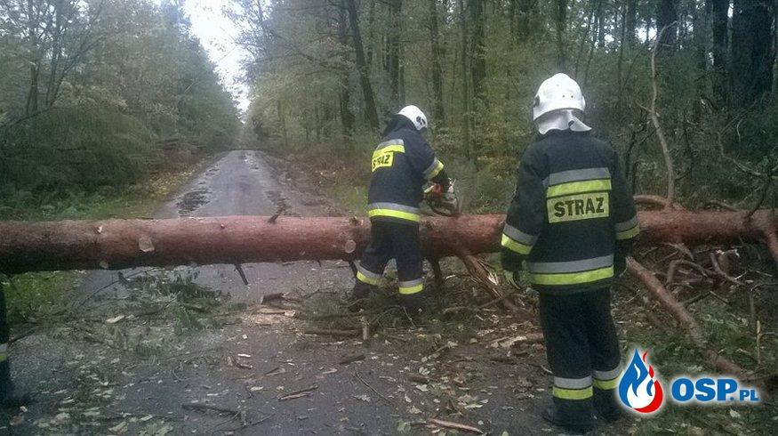 Silny wiatr - Powalone drzewa!!! OSP Ochotnicza Straż Pożarna
