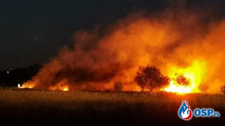 Pożary w Daniszewie i Kole OSP Ochotnicza Straż Pożarna