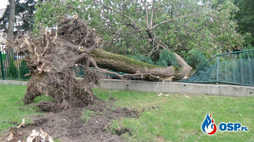 Dziwiszów: Drzewo przewróciło się na jezdnię! OSP Ochotnicza Straż Pożarna