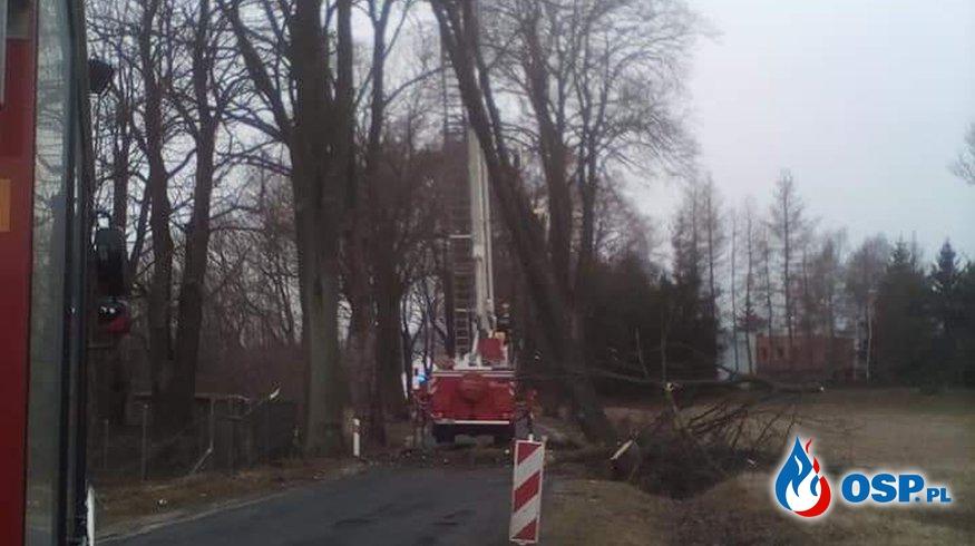 Powlaone Drzewo OSP Ochotnicza Straż Pożarna