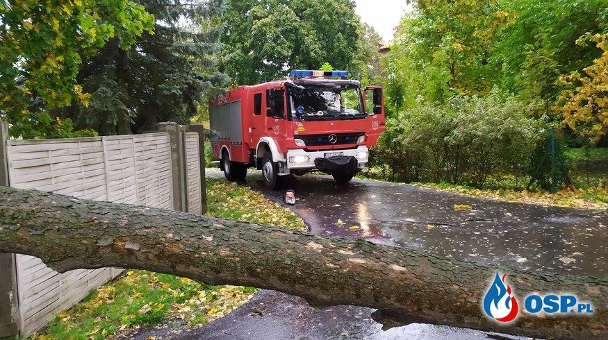 Wyjazd do powalonych drzew OSP Ochotnicza Straż Pożarna